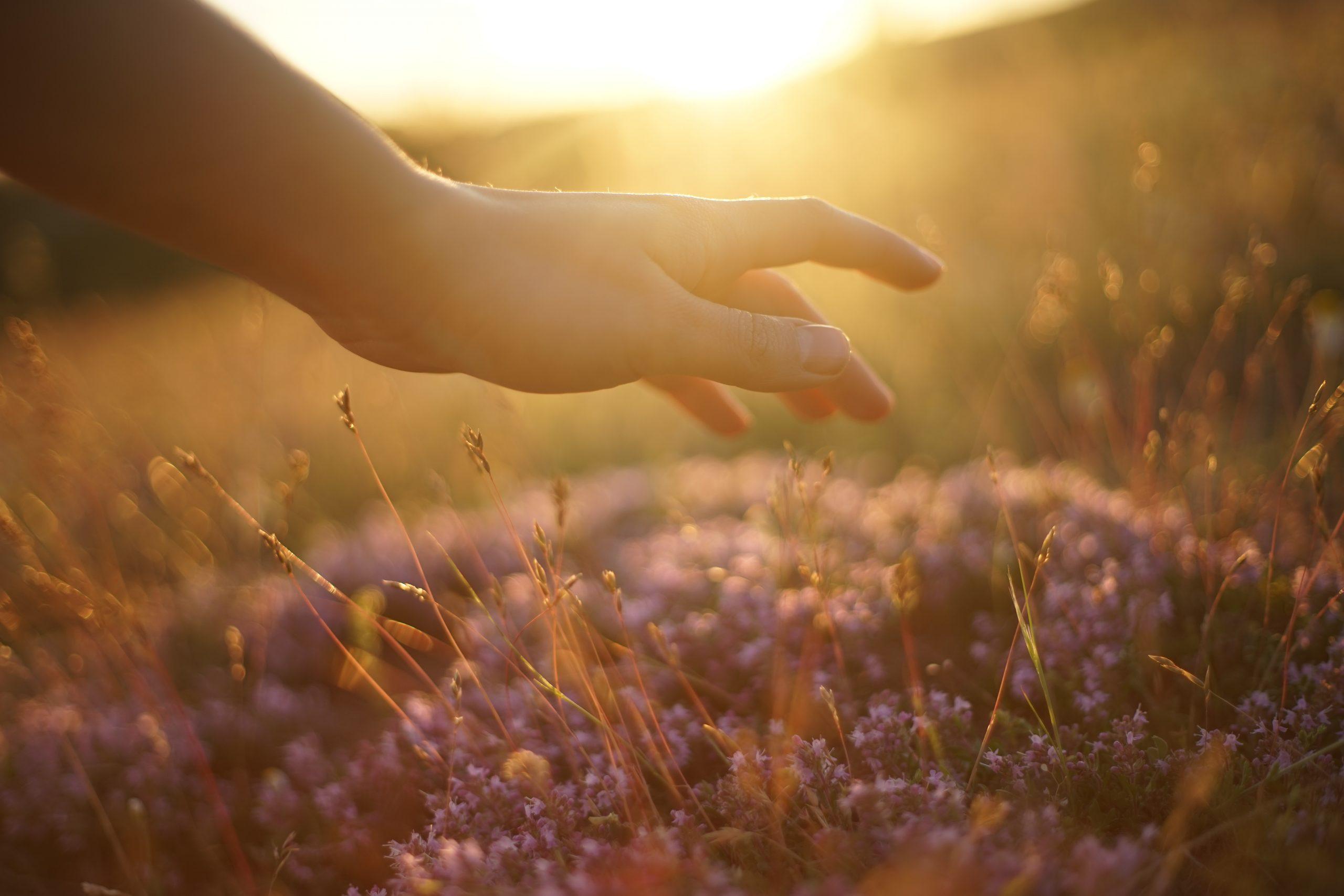Main qui touche des fleurs violettes du bout des doigts dans un champ